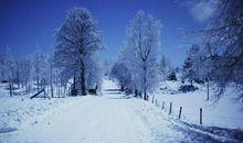 描写冬天的排比句