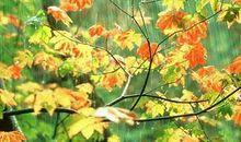 描述秋雨的句子