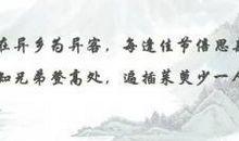 重阳节的诗句古诗