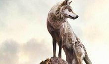 狼性团队口号押韵