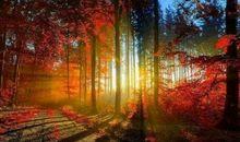 秋天唯美简短的句子 秋天文艺说说句子