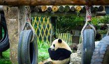 形容动物园开心的句子