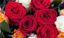 描写玫瑰的优美句子