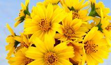 路边野花与心情的句子