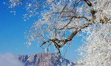 关于写雪的比喻句