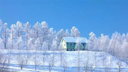 在寒冷的冬天