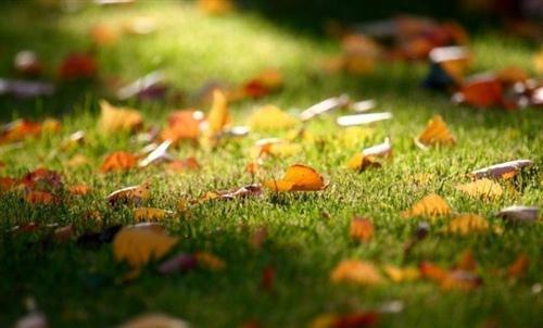 秋天越来越浓