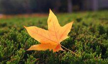 形容秋天给带来一种开心的句子