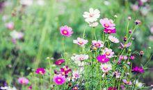 关于野花的句子