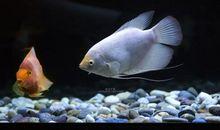 看着鱼儿开心的句子