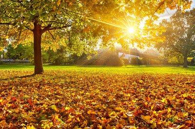10.不知不觉中,天空变得越来越冷,秋天来临时。我衷心地希望你,幸福每天环绕着你。请记住,白天要加衣服,晚上要盖被子。一日三餐是必不可少的,而且身体对于记住很重要。给您发短信,请牢记我的友谊。秋天快乐,兄弟。