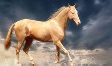 骑马不带鞭歇后语