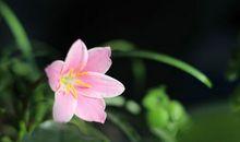 愿一朵花的清香能够抚慰我内心的焦虑,拥抱所有的好运气