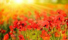 写阳光的唯美句子,用阳光写一句话唯美的