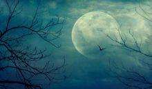 用月亮表达思念的诗句