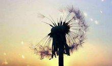 人生虽有遗憾,但失去也是成长
