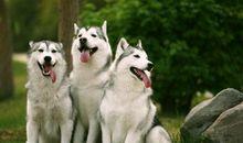 关于宠物开心的句子 形容狗狗很开心的句子
