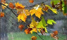 写景作文:秋天的雨