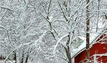 关于描写冬天寒冷的句子
