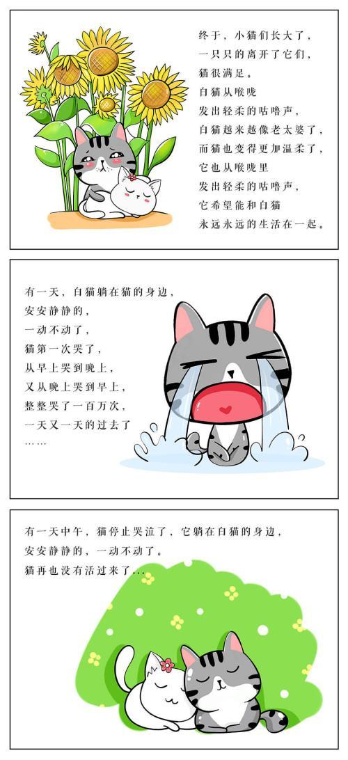 哲学故事:活着一百万次的猫