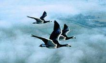 迁徙的鸟观后感