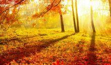 我爱美丽的秋天