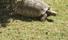 乌龟也上网观后感